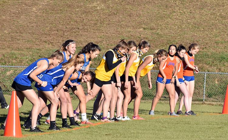 Three of Cherokee County's girls cross country teams line up ahead of the start of the Bulldog XC Meet 1 on Nov. 18.